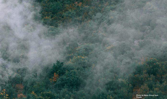 Forest disturbance puts World's ecosystems at the edge of havoc, think tank